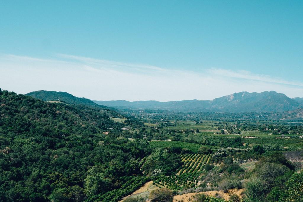 landscape-vineyard